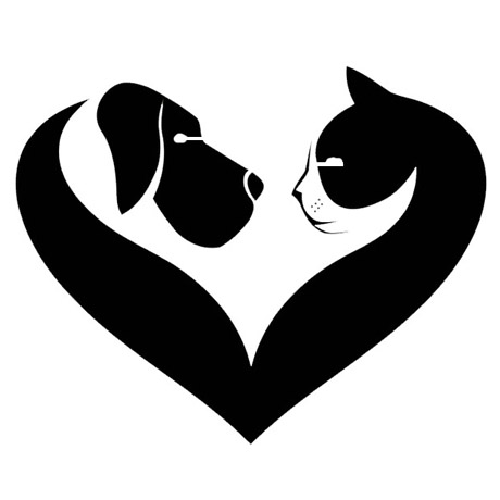 amo-cao-gato